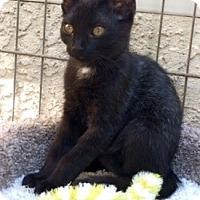 Adopt A Pet :: Gigi - Sacramento, CA