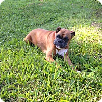 Adopt A Pet :: CHLOE - Bolingbrook, IL