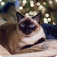 Adopt A Pet :: Simone - Phoenix, AZ