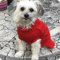 Adopt A Pet :: Kaydee - San Diego, CA