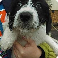 Adopt A Pet :: Parka~ meet me! - Glastonbury, CT