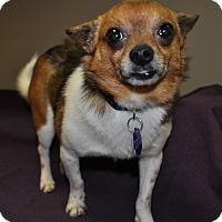 Adopt A Pet :: Chuckie - Lexington, KY