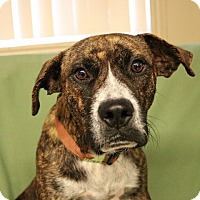 Adopt A Pet :: Piper - Green Bay, WI