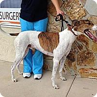 Adopt A Pet :: Jerry - Tampa, FL