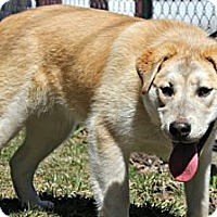 Adopt A Pet :: Female 2 - Grand Rapids, MI
