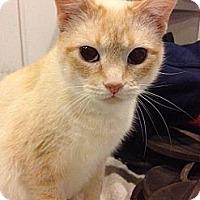 Adopt A Pet :: Jordyn - Byron Center, MI