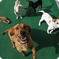 Adopt A Pet :: Leai - Atascadero, CA