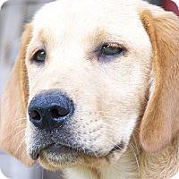 Adopt A Pet :: Redford - Foster, RI