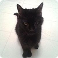 Adopt A Pet :: Paula - Vancouver, BC