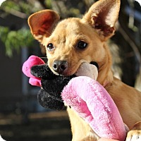 Adopt A Pet :: Hunter - Winters, CA