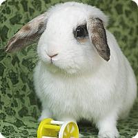 Adopt A Pet :: Allistaire - Santa Barbara, CA