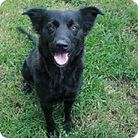 Adopt A Pet :: Cali - san antonio, TX
