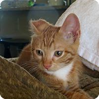 Adopt A Pet :: Lettie - Bentonville, AR