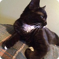 Adopt A Pet :: Blanco - Hamilton, ON