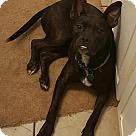 Adopt A Pet :: Jingo