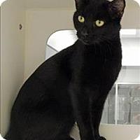 Adopt A Pet :: Midnight - Topeka, KS