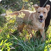Adopt A Pet :: Janko - Bardonia, NY
