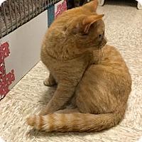 Adopt A Pet :: Barney - Colmar, PA
