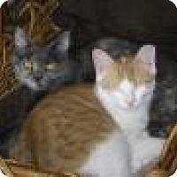 Adopt A Pet :: Shayla - Breinigsville, PA
