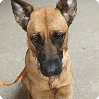 Adopt A Pet :: Moo-Mei-Adopted! - Detroit, MI