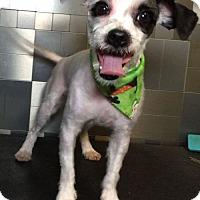 Adopt A Pet :: Fairfax - McKinney, TX
