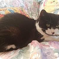 Adopt A Pet :: Precious - Freeport, NY
