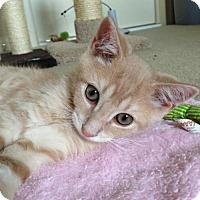Adopt A Pet :: Luke - Whitehall, PA