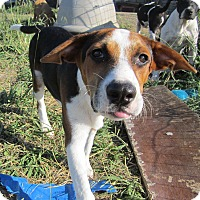 Adopt A Pet :: Zeus - Copperas Cove, TX