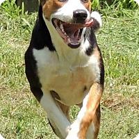 Adopt A Pet :: Buddy - Joplin, MO