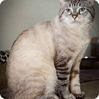 Adopt A Pet :: Kernel - Trevose, PA