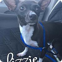 Adopt A Pet :: Lizzie - Cantonment, FL