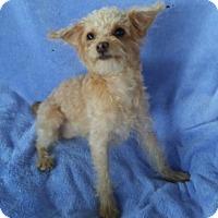 Adopt A Pet :: Suzy - Temecula, CA