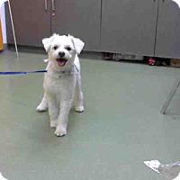 Adopt A Pet :: POOCH-URGENT 10/25 @ DEVORE - San Bernardino, CA