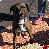 Adopt A Pet :: SABLE - Phoenix, AZ