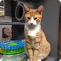 Adopt A Pet :: BamBam - Edgewater, NJ