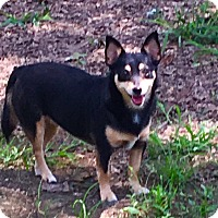 Adopt A Pet :: Fifi - sweetest girl - Chicago, IL