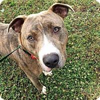 Adopt A Pet :: Titan - Wartrace, TN
