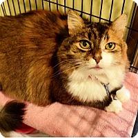 Adopt A Pet :: Tatiana - Thousand Oaks, CA
