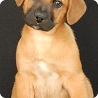 Adopt A Pet :: Wolverine - Newland, NC