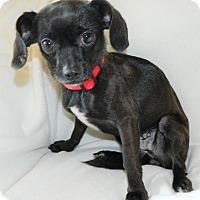 Adopt A Pet :: Tulip - Umatilla, FL