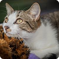 Adopt A Pet :: Makano - Vancouver, BC