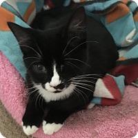 Adopt A Pet :: Iris - Toledo, OH