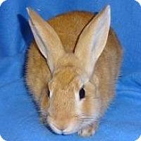 Adopt A Pet :: Morris - Woburn, MA