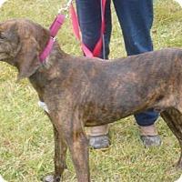 Adopt A Pet :: Kirby, D46 - Mineral, VA