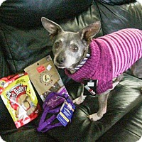 Adopt A Pet :: Riley 3396 - Toronto, ON