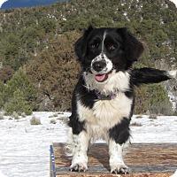 Adopt A Pet :: Boomer & Squarey - Ridgway, CO