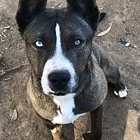 Adopt A Pet :: Mia - Long Beach, CA