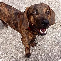 Adopt A Pet :: Deon - Muskegon, MI