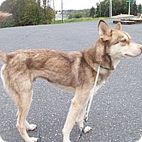 Adopt A Pet :: Dalton - Augusta County, VA