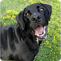Adopt A Pet :: Jake - Happy Fella - Zebulon, NC